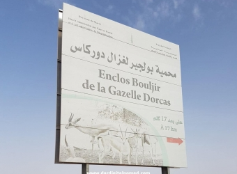 Gazelle Animal Natural Reserve of Bouljir